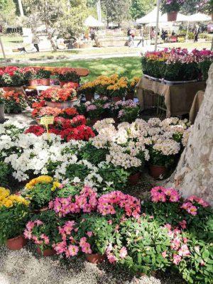 flower market giardino orticoltura